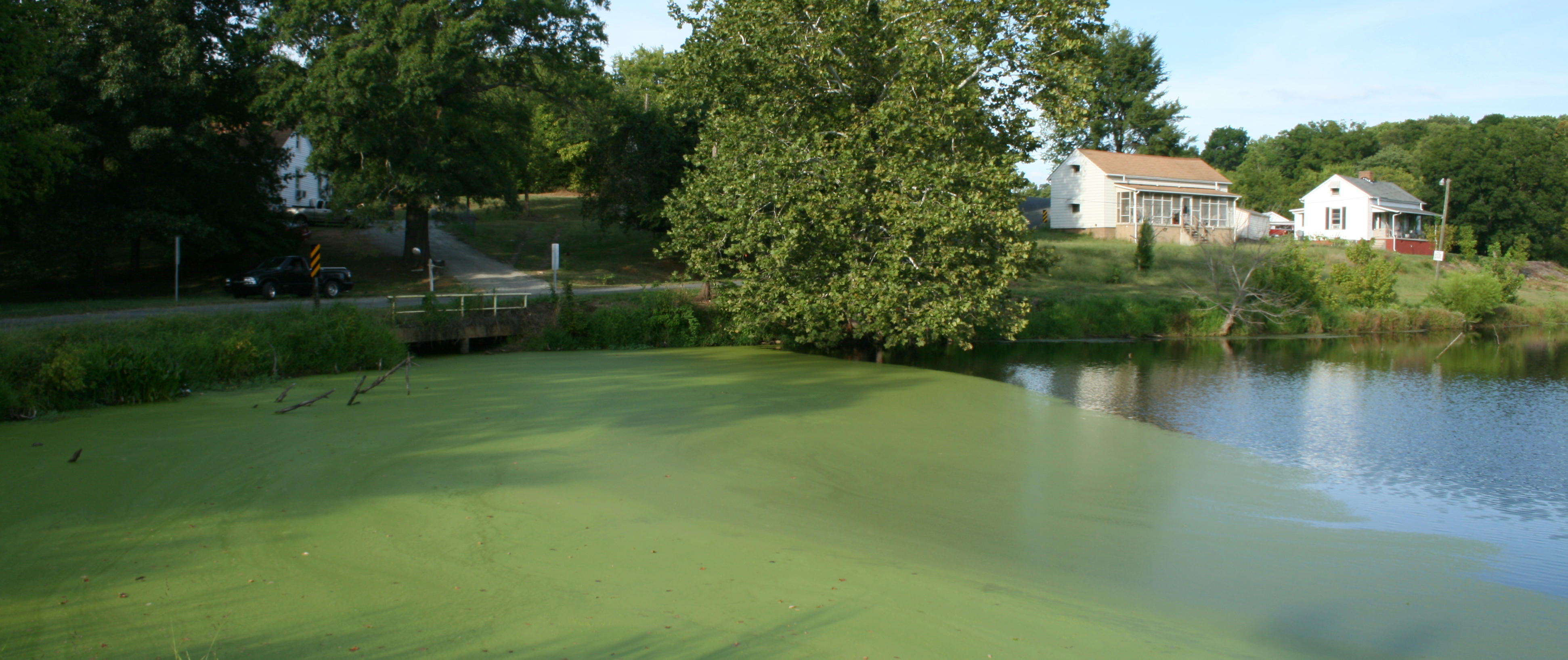 Algae blooming in pond near white house