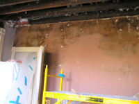 image of mold on walls caused by hurricane damage