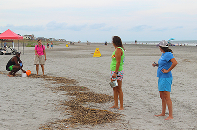 Volunteers counting and collecting cigarette butts on Folly Beach